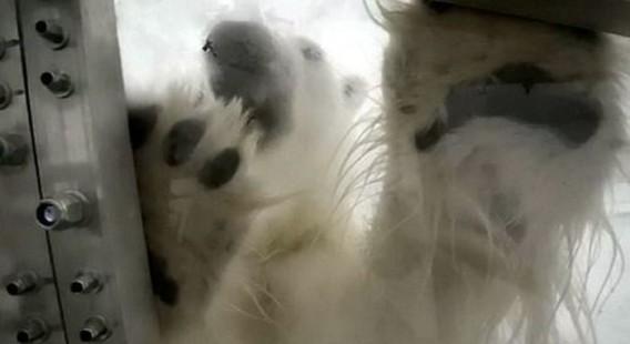 polar_bears_07_e