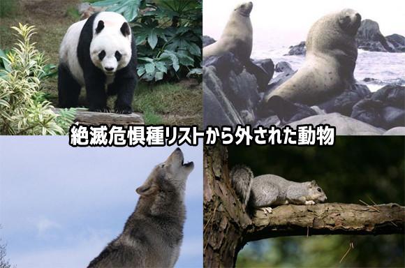 絶滅危惧種リストから外された10種の動物たち