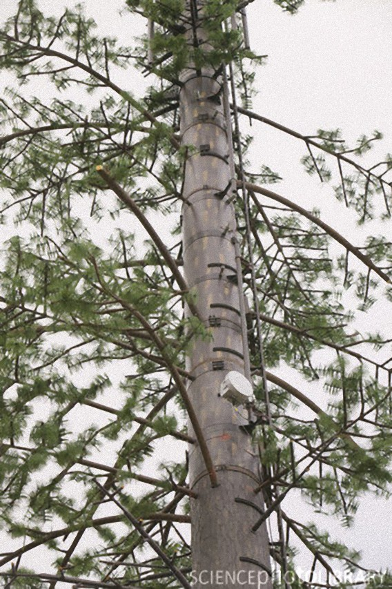 C0061530-A_camouflaged_cellphone_tower-SPL_e