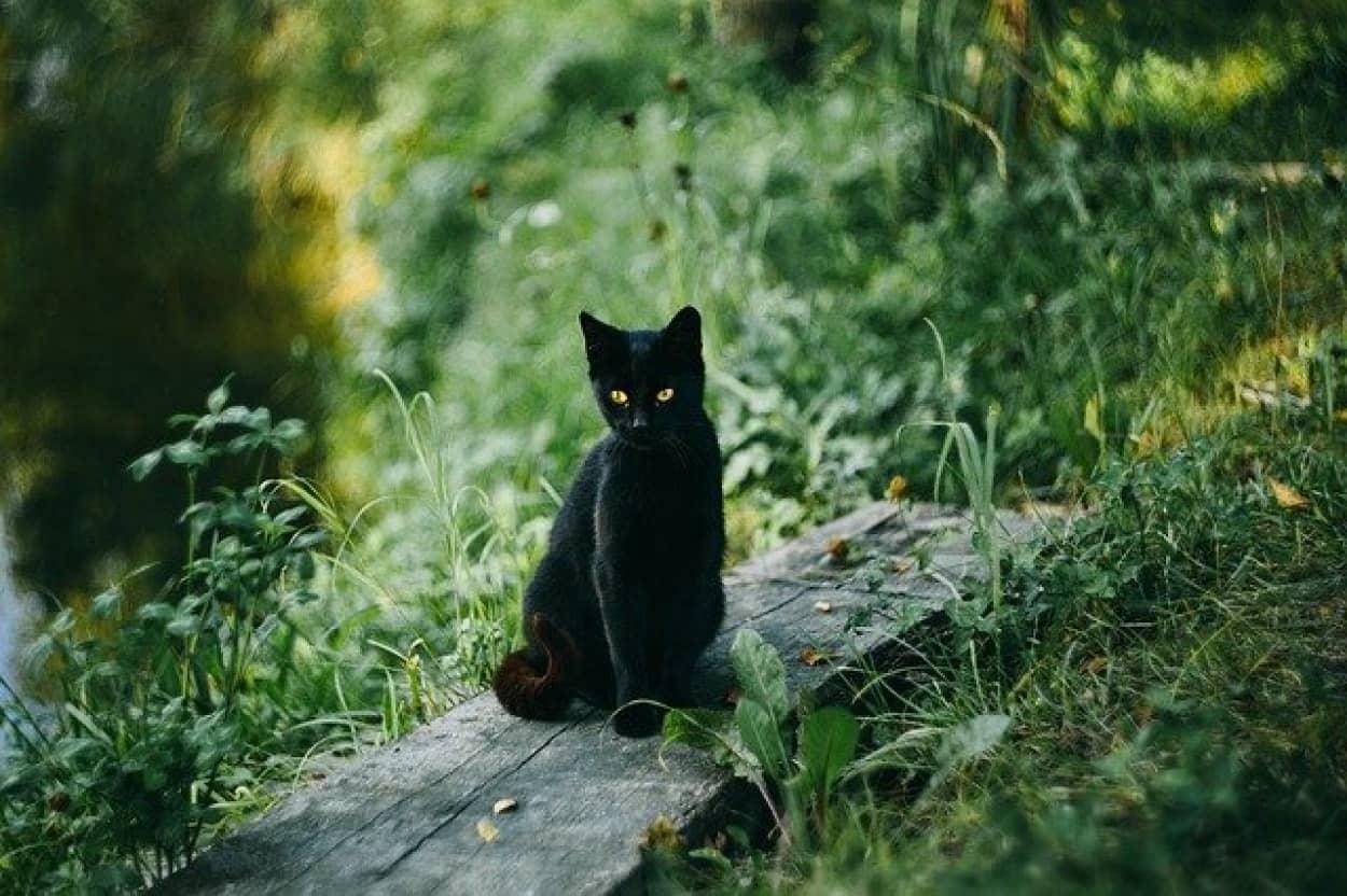 飼い主が危ないニャ!大声で鳴き続け、居場所を知らせた猫のおかげで無事救助される