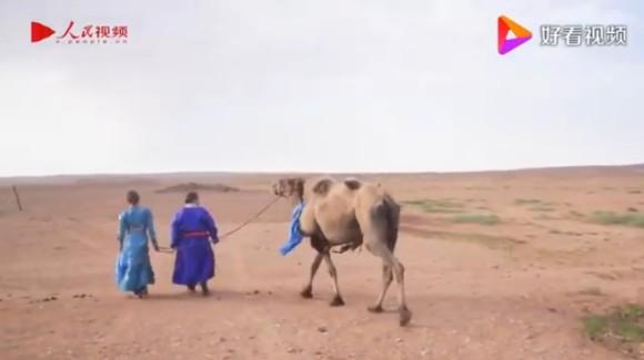 camel2_e