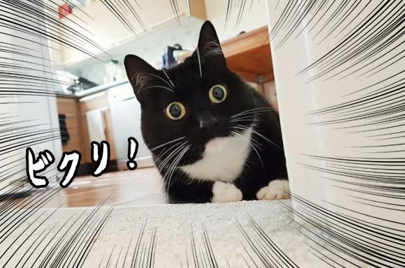 まん丸お目目がウルトラキュート!驚いてなくてもびっくり顔の猫がインスタアイドルに