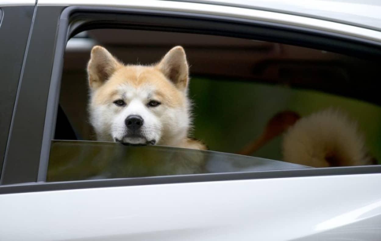 新型コロナ感染リスクを減らすための車の換気方法