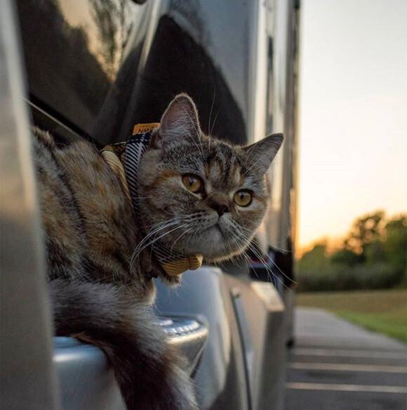 トラック運転手と共に全米を旅する猫、すでに43州を回る(アメリカ)