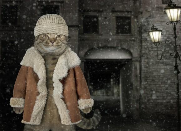 「悪い子は食うにゃ!」アイスランドに伝わる恐怖のクリスマスキャットとは?