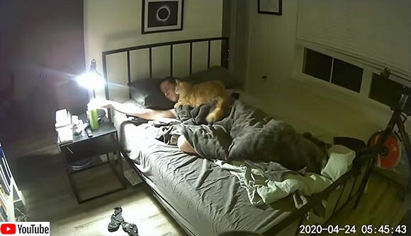 猫飼いあるある。早朝の2時間にわたるベッド上での攻防戦をご覧ください