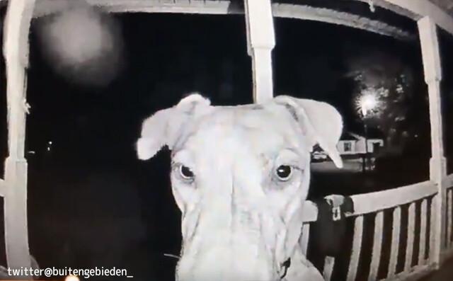 「帰ってきたよー!」花火の音が怖くて失踪した犬。7.5時間後に玄関ベルを鳴らして帰宅したことを知らせる