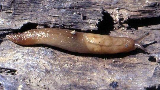 021072-slug