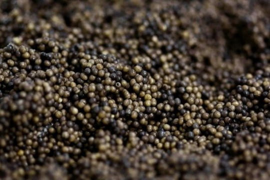 1258610567_how_black_caviar_is_made_05