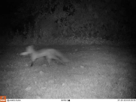 fox-4 [www.imagesplitter.net]