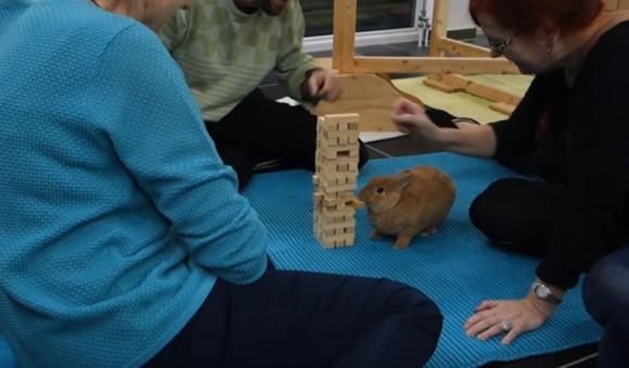 ジェンガをたしなむウサギ。おばあさんの為に見事ブロックを引き抜く