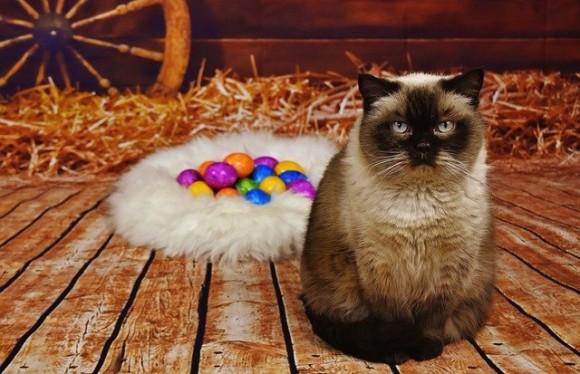 TikTokで流行中の猫卵チャレンジ