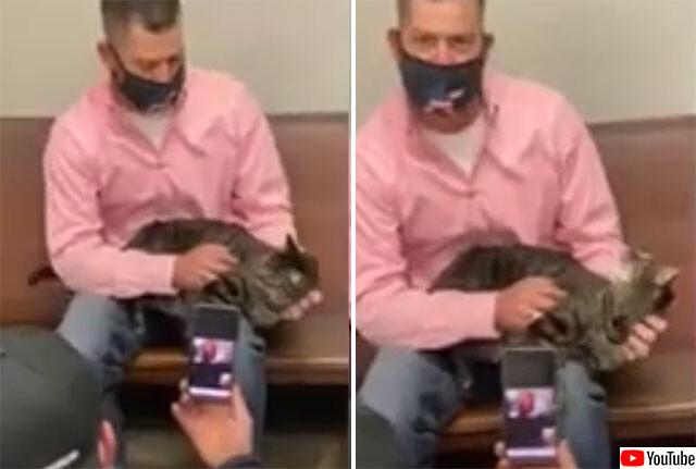 行方不明の猫が4年後に発見される