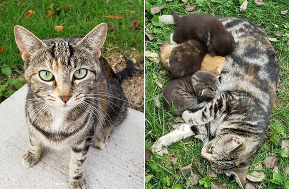 人になれるのを良しとしなかった野良猫が、1人の女性に心を開き、生まれたばかりの我が子の元へと案内するまで