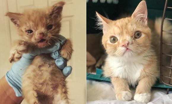 獣医学校の敷地を1匹だけでさ迷っていた唯一無二の特別な猫。獣医学生が救い、永遠の家族にめぐり合うまでの記録(アメリカ)
