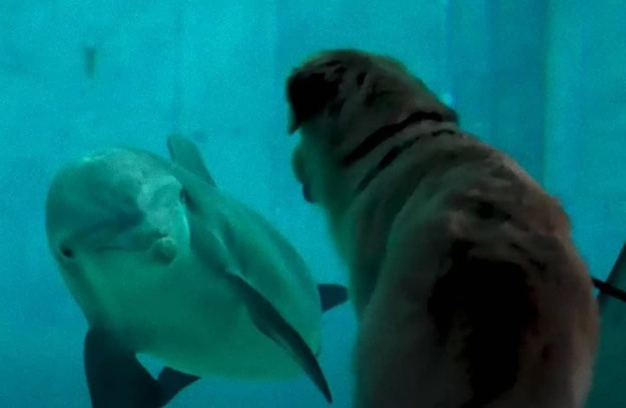 イルカと犬に芽生えた友情