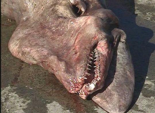 sharks_03