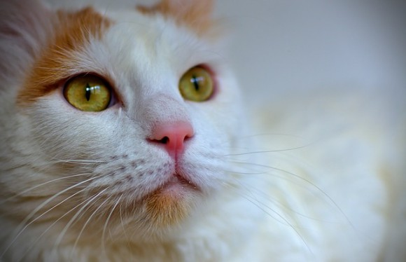 cat-714668_640_e