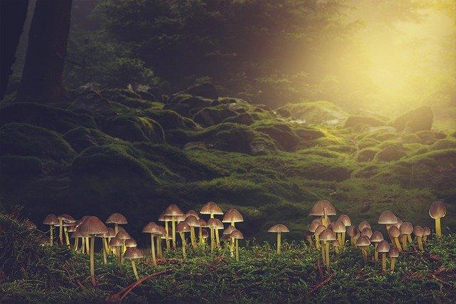 キノコが宇宙を救う。菌糸体で作った人工衛星でスペースデブリ問題を解決できる可能性