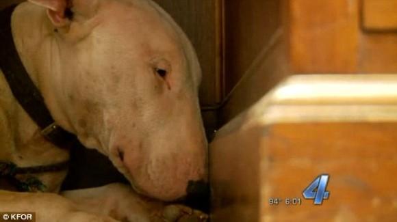 野外で亡くなった飼い主を守ろうと、猛暑の中遺体から離れようとしなかった犬(アメリカ)