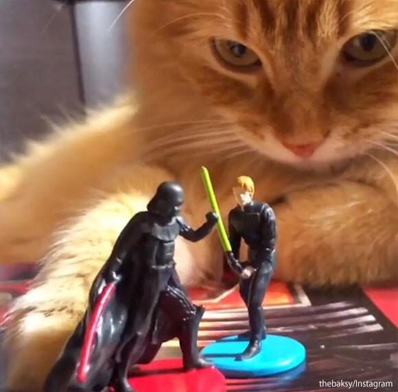 スターウォーズフィギュアでごっこ遊びをしてた猫が暗黒面に落ちる瞬間