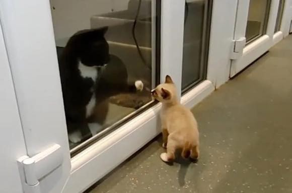 cat1e