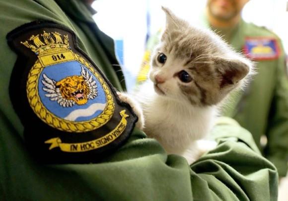 イギリス海軍兵の愛車のバンパーに潜り込んでいた子猫。この出会いがきっかけで入隊。海を守るマスコット猫に