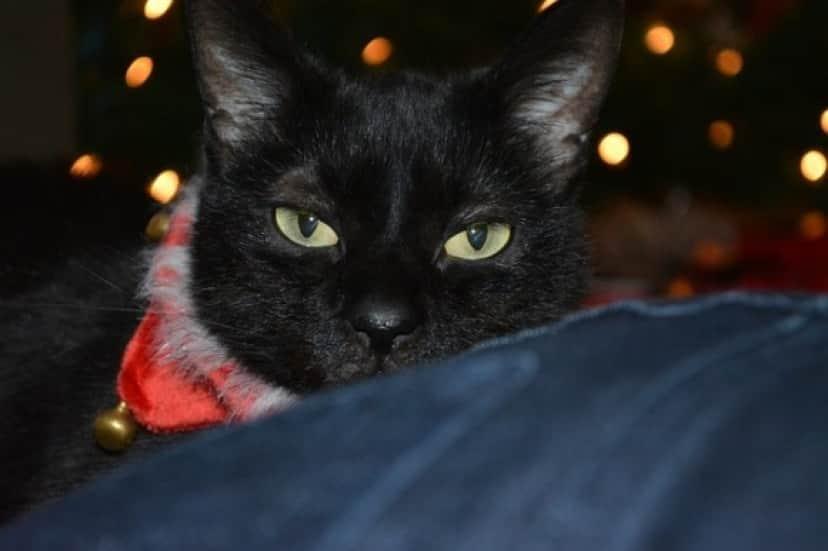 black-cat-2987308_640_e
