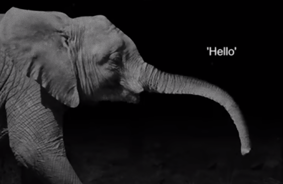 ゾウの気持ちに寄り添える。人間の言葉をゾウの鳴き声に変換してくれる翻訳サイトが登場