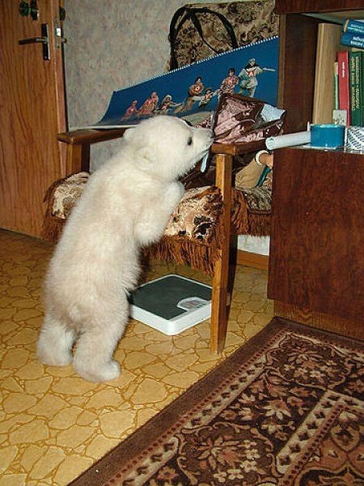 polarbearbabysaved-30
