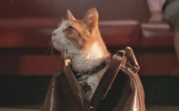 良く見つけたし!猫が写っている映画を発見したら投稿するツイッターのアカウント「この映画に猫いる?」