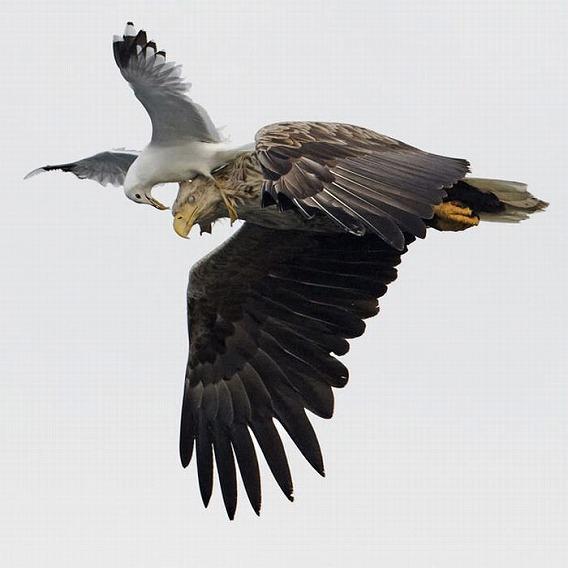beautiful_photographs_of_birds_15
