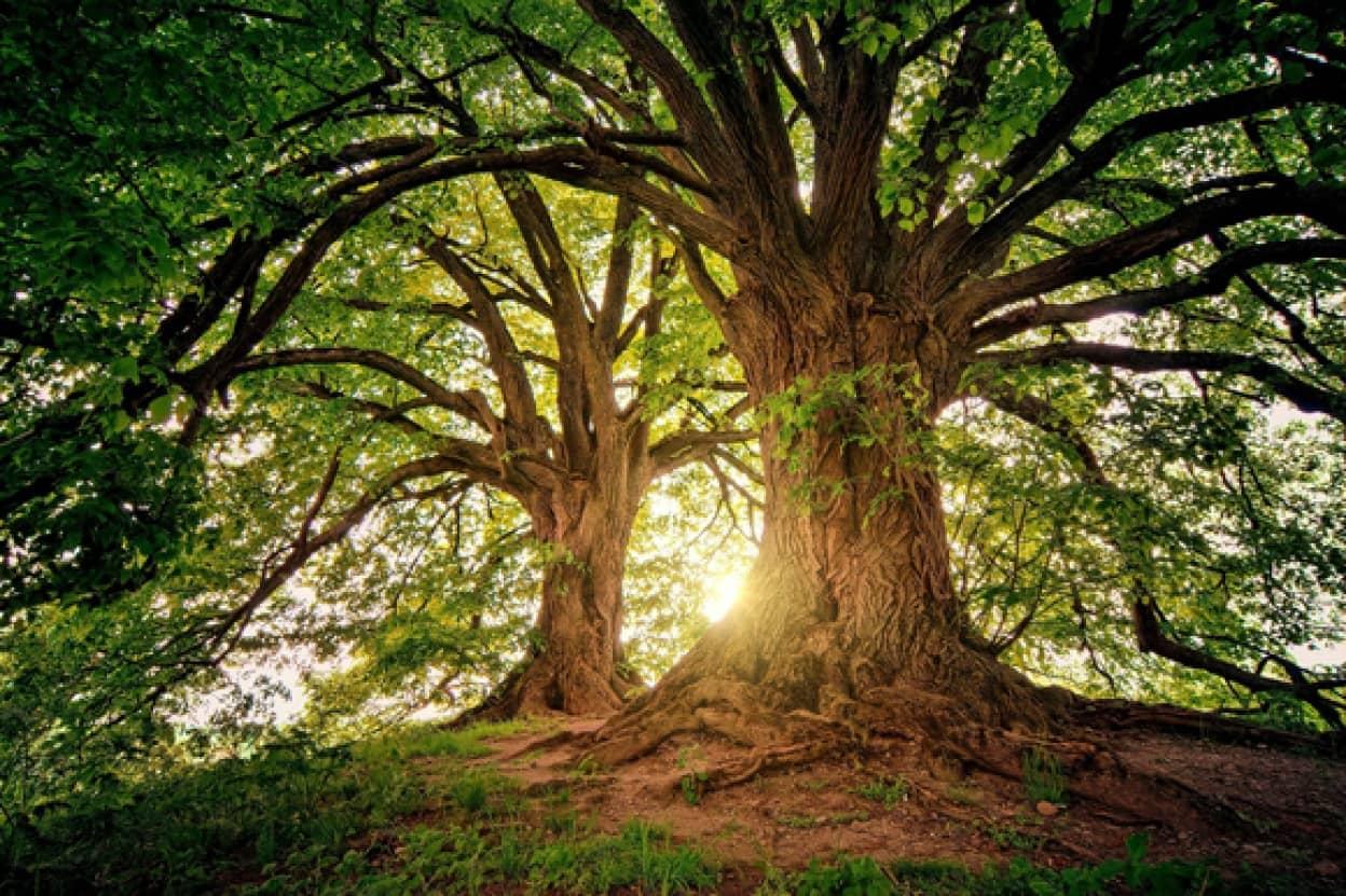 樹木の年齢を知る方法