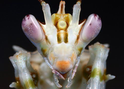 alien_insects_07
