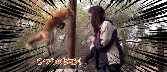 うれピョン!はねピョン!お姉さんにてなずけられたキツネのコンコンジャンプ