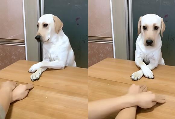 完コピじゃないですか!右・左・右・左。飼い主の手の動きを完全再現する犬