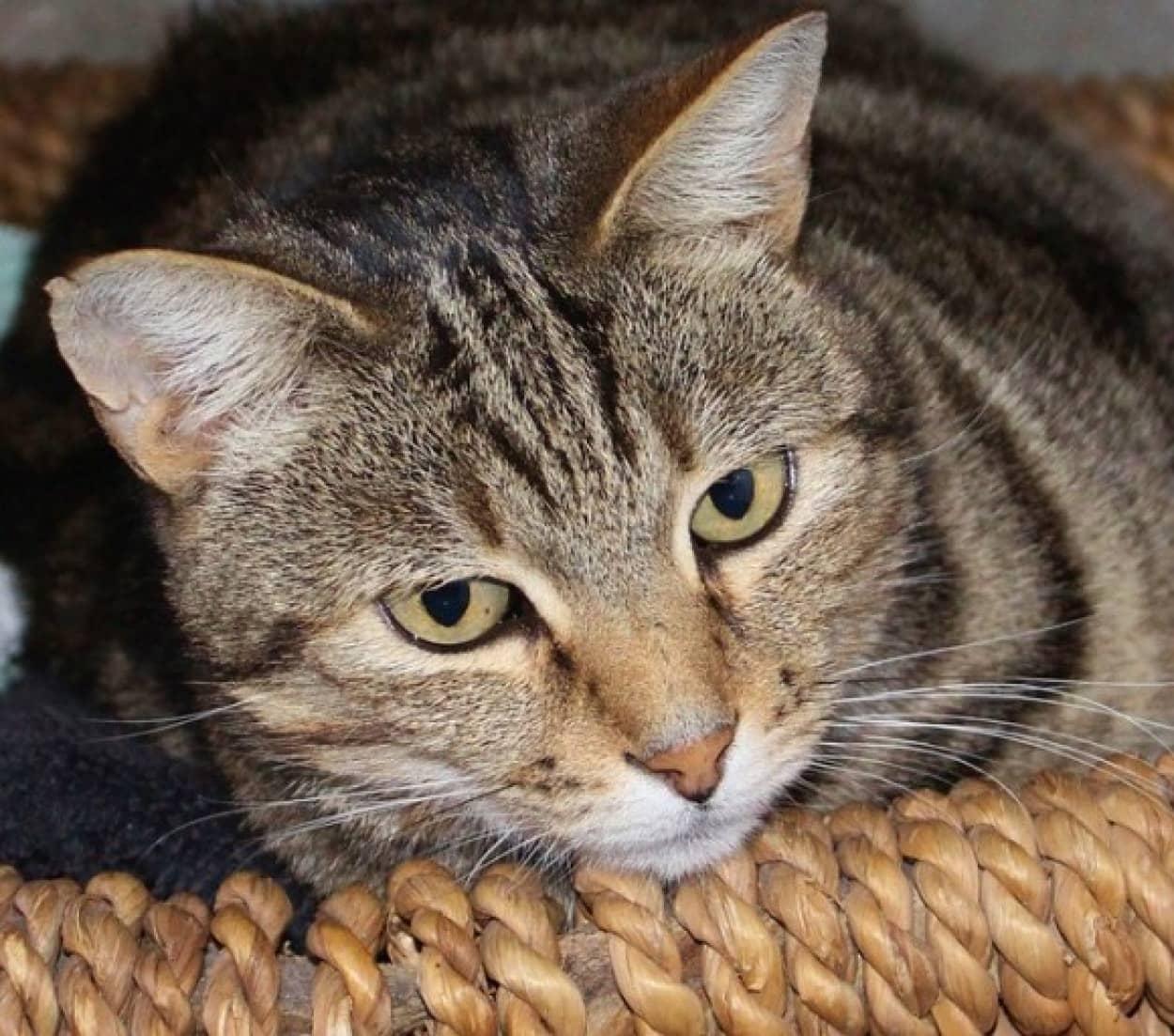 cat-660692_640_e