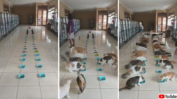 まるで猫版学級給食のよう。バリ島の保護施設で2列に並んで一斉にご飯を食べる猫たち