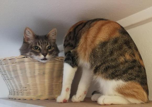 頭と体が分離した猫