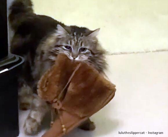 長靴を運ぶ猫