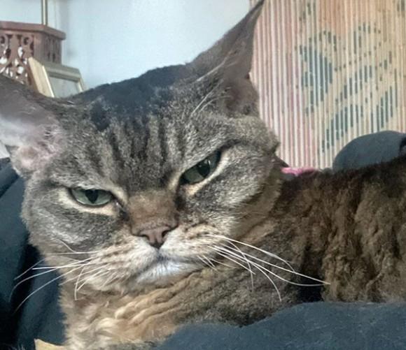不機嫌顔の保護猫は、甘えん坊のデレデレ猫だった。飼い主となった女性に心を開くと片時も離れなくなる