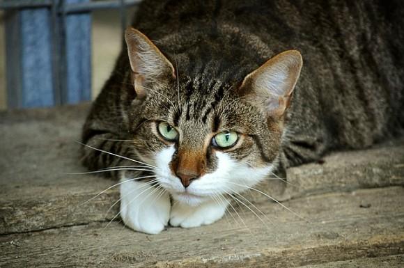 cats-eyes-2671903_640_e