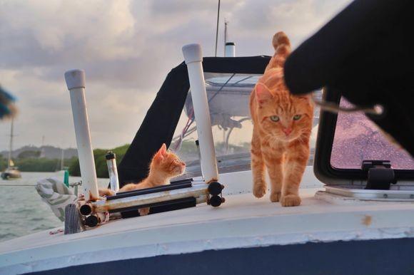 行き場のなかった野良猫がヨットの船長となった。そしてもう1匹、同じ境遇だった子猫が船員に加わる。