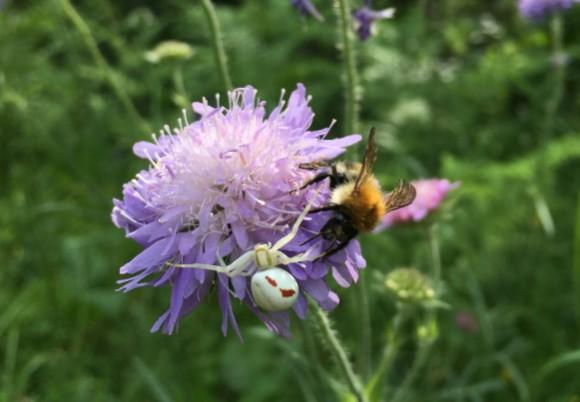 昆虫にも感情がある?マルハナバチが喜びの感情を持っていることが明らかに(英研究)