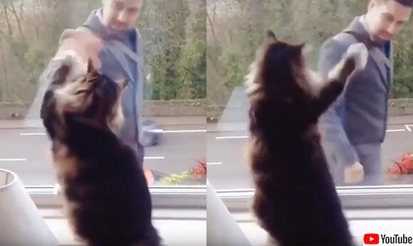「いまから出勤か?おつかれ」通行人男性に手を振る猫