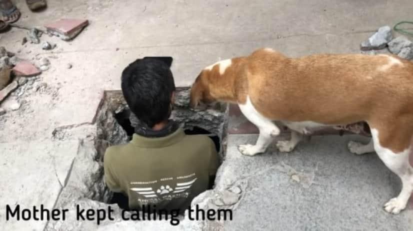 mother dog _e