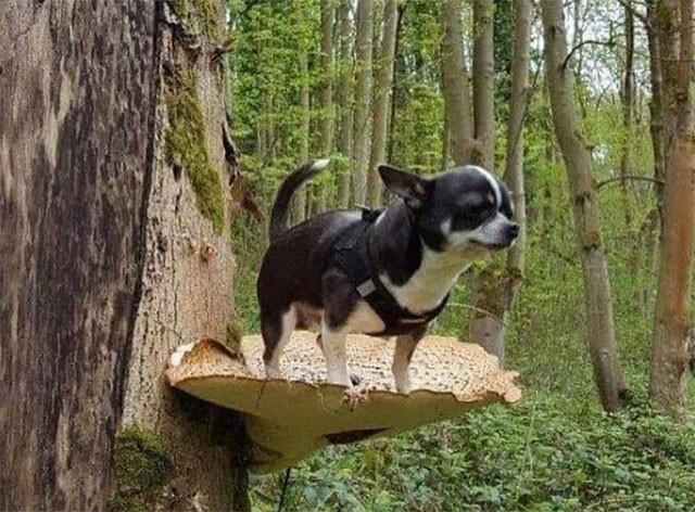 「きのこに乗る犬」というシュールな構図を鑑賞するの会