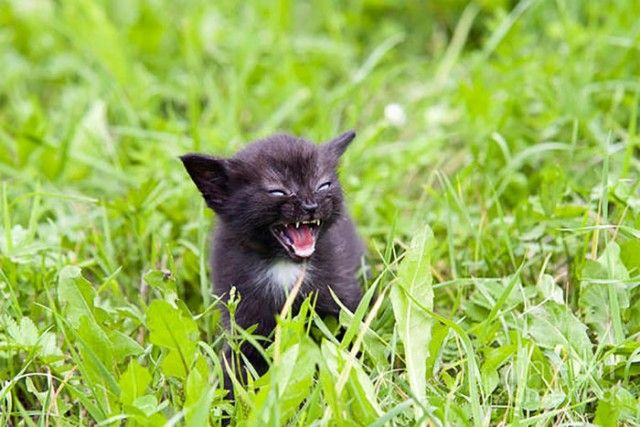angry-kittens-4-591aef315d0d6__700_e