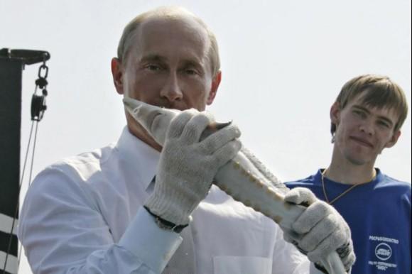 チョウザメとプーチン大統領