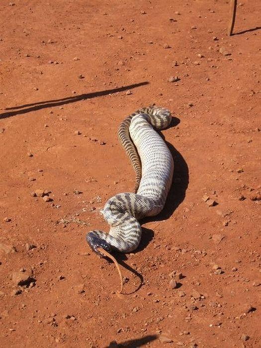snake_14